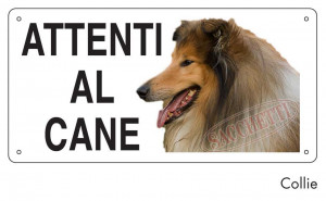 Attenti al cane Collie