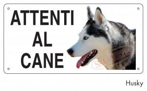 Attenti al cane Husky