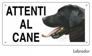 Attenti al cane Labrador